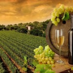 Рождение виноделия