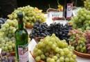 Разнообразный мир вина
