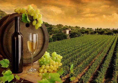 Страны-производители лучших вин мира