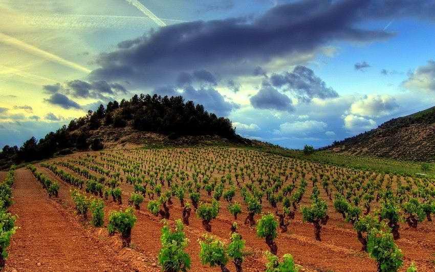 Вина Риохи - виноградники